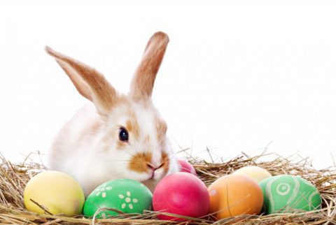 WELLNESS & MASSAGE – SPECIAL EASTER